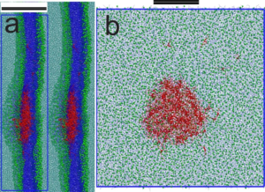 Accumulation of triolein (red) inside a lipid bilayer (blue): the first steps to lipid droplet biogenesis. See http://journals.plos.org/plosone/article?id=10.1371/journal.pone.0012811